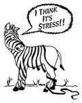 Stress_Zebra